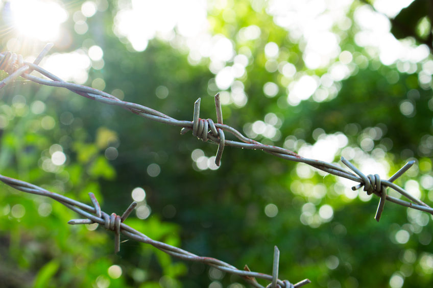 87648258 - barbed wire on sunny greenery background. barbed wire under sunshine. water drops on sharp wire knots. garden fence protecting property. black wire border. nature boundaries and sunny freedom concept